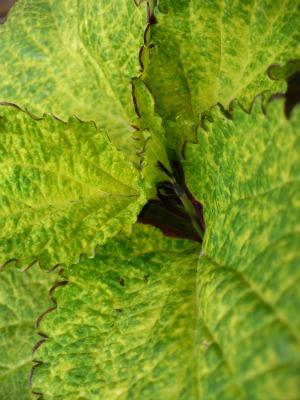 Plants Close-up