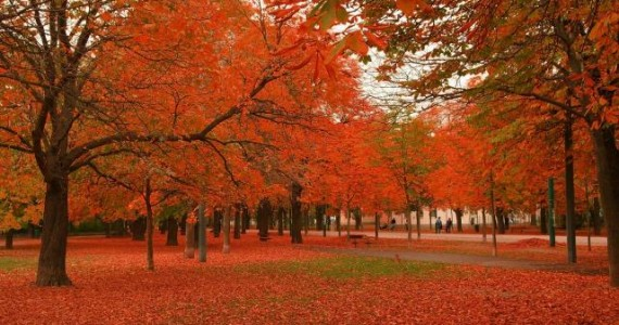 autumn trees2